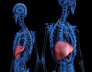 المانوكا و أمراض الكبد